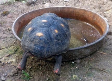 tortoise legs
